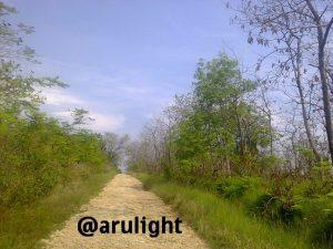 jalan rusak ini menuju desa lembor. peohonan berjejer dengan tenang